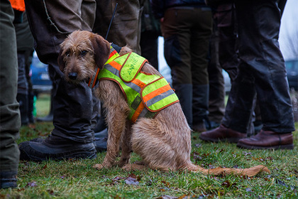Собака подстрелила охотника и лишила его лицензии