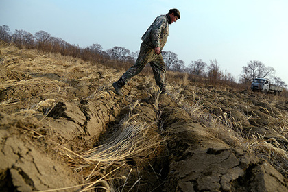 Россия обеспечила независимость своих семян пшеницы