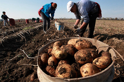 Сельхозкооперативы имеют все шансы объединить индивидуальные хозяйства