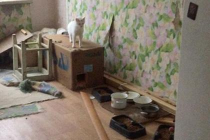 Коты затопили многоквартирный дом в Санкт-Петербурге