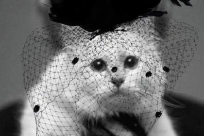 Кошка Лагерфельда ушла в траур