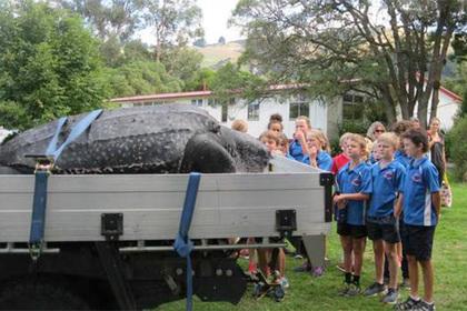 Редкую 200-килограммовую черепаху нашли мертвой в Новой Зеландии