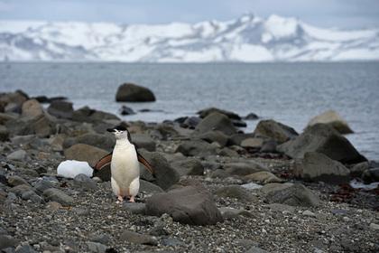 Россия построит новую станцию в Антарктиде к двухсотлетию ее открытия