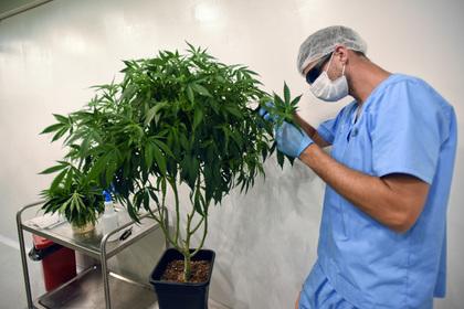 На Украине задумались о легализации марихуаны