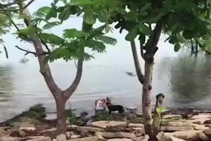 Нападение огромного крокодила на игривого пса попало на видео