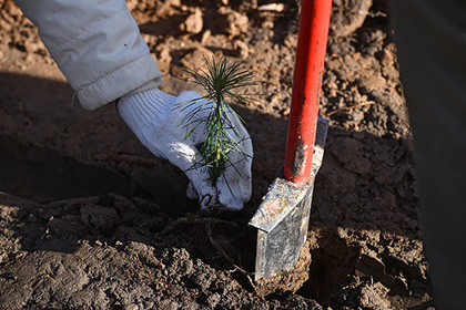 «Роснефть» высадила миллион саженцев