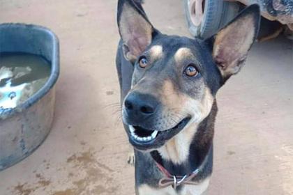 Бездомная собака защитила незнакомцев от агрессивных обезьян и обрела дом