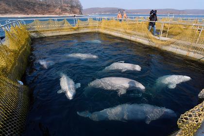 В Приморье подписали соглашение по китовой тюрьме