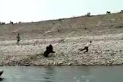 Нападение медведя на человека сняли на видео