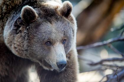 Юноша вырвался из хватки медведя и прогнал его