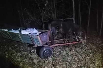 Украинцев с сотнями килограммов сала поймали на границе с Белоруссией