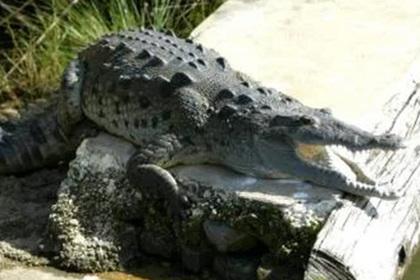 Электрик всю ночь прятался от крокодила в холодильнике и потерял ногу