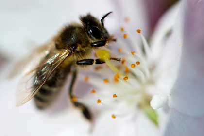 PornHub запустил канал с пчелиным порно