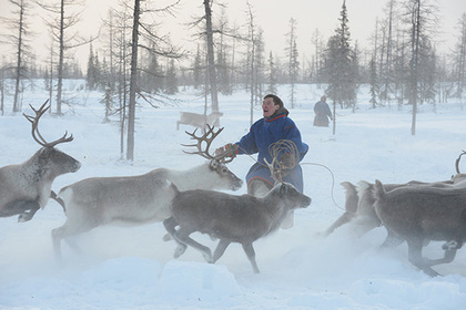 Для оленеводов и рыбаков Арктики разработают профессиональные компетенции