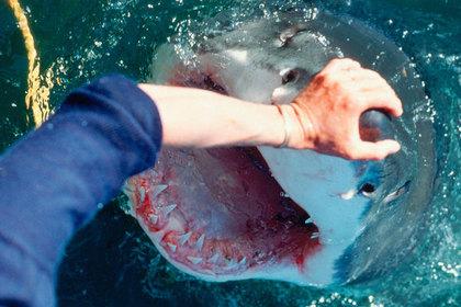 Оператор заглянул в пасть акулы и выжил