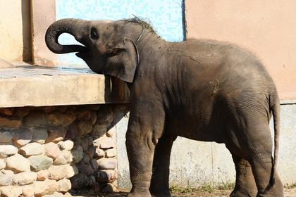 Слон насмерть затоптал пять человек за одну ночь