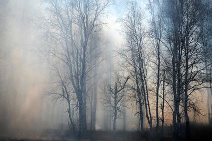 От степных пожаров в Забайкалье пострадали почти 650 человек