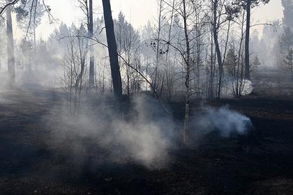 Подсчитано число получивших ожоги в результате пожаров в Забайкалье