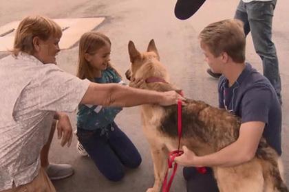 Пропавшую собаку нашли за тысячи километров от дома
