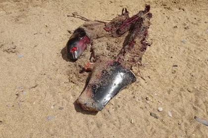 В Крыму разделали и продали на рынке туши выбросившихся на берег дельфинов