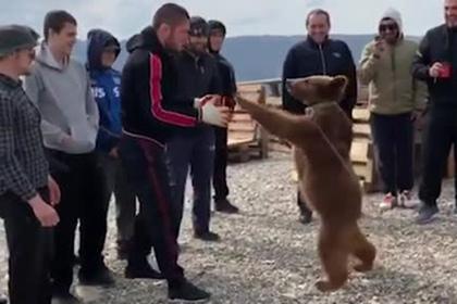 Нурмагомедов снова поборолся с медвежонком