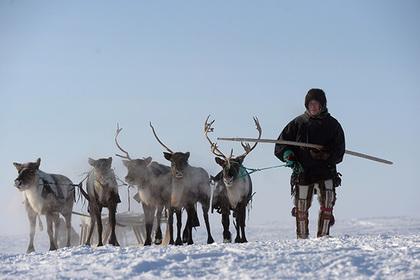 Ямал собрался продавать оленину и северную рыбу в Китай