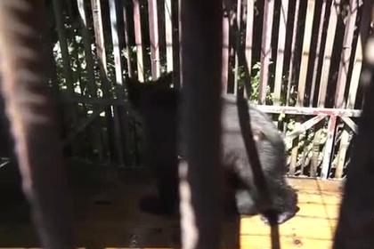 Россияне спасли брошенного в клетке без еды и воды медвежонка photo