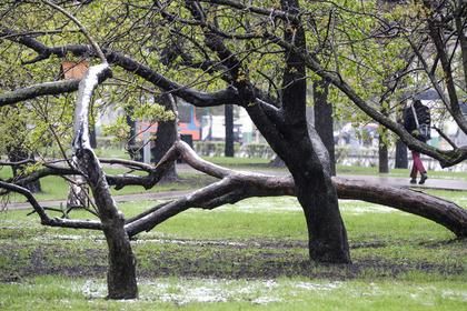 Российские чиновники поискали майский снег и не нашли