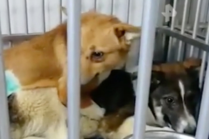 В России нашли собачий «лагерь смерти»
