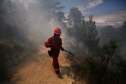 Веган-пожарный пожаловался на работодателей за нехватку еды