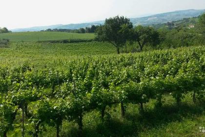 Россиянам предложили итальянскую винодельню за 258 миллионов рублей