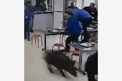 Дикий кабан устроил погром в переполненной людьми столовой и умер