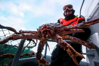 В Мурманской области рыбакам разрешат ловить краба