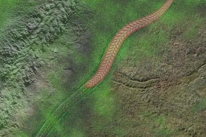 «Марш смерти» древнего червя помог ученым раскрыть тайну эволюции