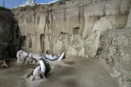 Найдено первое в истории кладбище гигантских вымерших существ