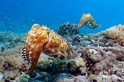 У головоногих моллюсков нашли признаки разума