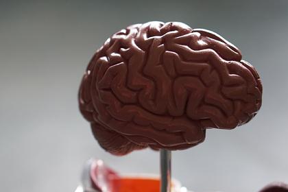 Внутри биочипа вырастили маленький живой мозг