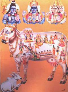 Корова как воплощение всех богов индуизма. Современный индийский плакат с сайта personal.carthage.edu