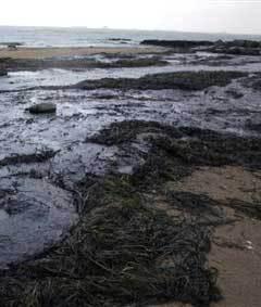 Нефтепродукты на берегу моря. Фото AFP