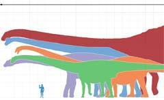 Сравнительные размеры различных зауроподов и человека. Кликните на картинке, чтобы увеличить изображение. Изображение пользователя Dinoguy2 с сайта wikipedia.org.