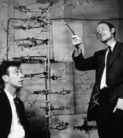 Ученые Джеймс Уотсон (James Watson) и Френсис Крик (Francis Crick), 1953 год. Фото с сайта science.jrank.org