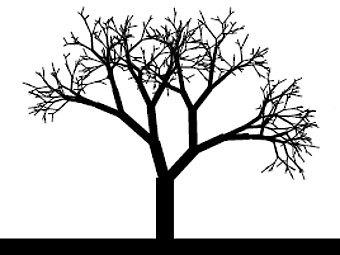 Фрактальное дерево. Иллюстрация авторов исследования