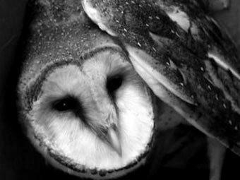 Погибшая сова.  Фото с сайта elheraldo.co