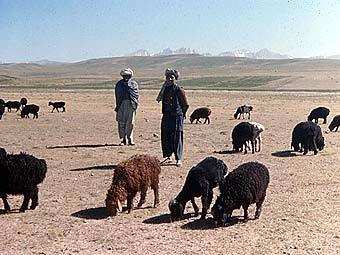 Афганское пастбище. Фото с сайта georgetown.edu