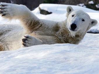 Медведь Кнут. Фото (c)AFP