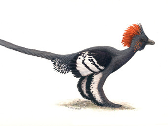 Anchiornis huxleyi. Иллюстрация Michael DiGiorgio/Courtesy Yale