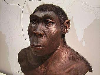 Предполагаемый внешний вид Homo erectus. Экспонат Археологического музея в городе Херне, Германия