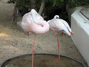 Спящие фламинго. Фото с сайта true-dubai.com