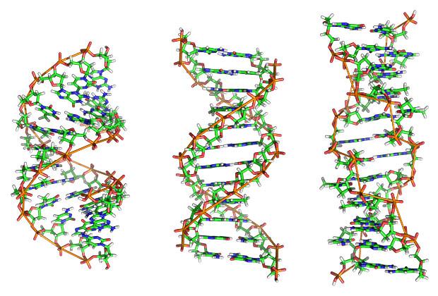 A, B и Z-формы ДНК. Видно, что первые две являются правыми спиралями (их скрученность соответствует нарезке винтов), а последняя - левой спиралью.