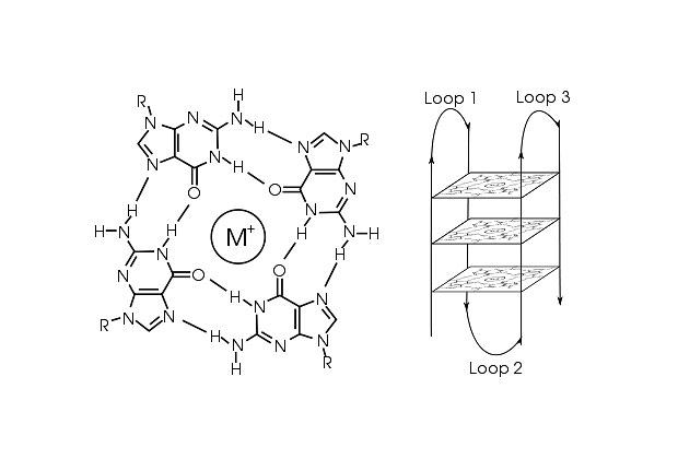 Структура G-квадруплекса. Слева показан квартет гуанинов, координированный ионом магния, справа - наложение таких структур друг на друга. Стрелки показывают ход цепи ДНК.